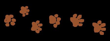 dog-tracks-15