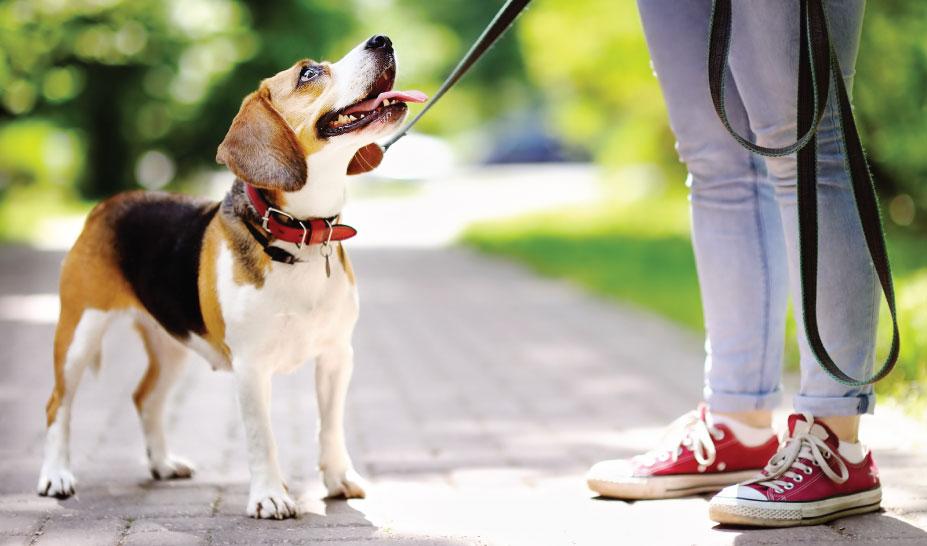 dog-training-classes-marlborough-ma
