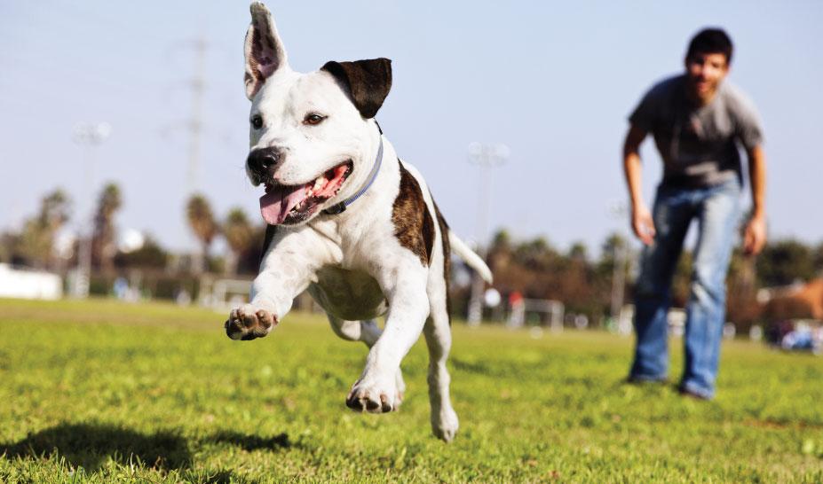 puppy-training-in-marlborough-ma-homepage-1